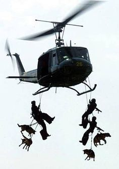 """Navy SEALS and Navy DOGS! This is an amazing photo of the Navy Seals repelling from a helicopter with their dog""""s. The Navy Seals will actually do this. Great action picture with only the rotary blades showing motion. War Dogs, Military Working Dogs, Military Dogs, Police Dogs, Military Salute, Military Honors, Perros Golden Retriever, Wow Photo, Tier Fotos"""
