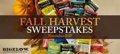 Bigelow Tea Fall Harvest Sweepstakes on http://www.icravefreebies.com/