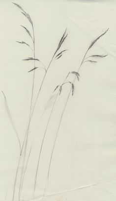 Grasses by Julian Williams 2013