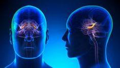 Demência Frontotemporal - O que é, Sintomas e Tratamentos