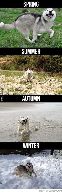 Happy Dog all seasons! #VickereyLoves #dogs