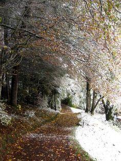Winter meets Fall in Wengen, Switzerland. October, 2012.
