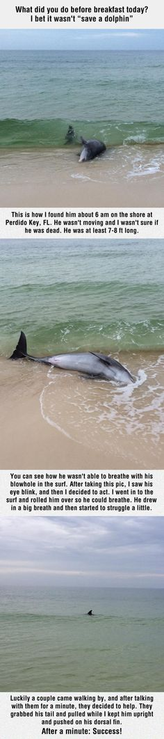 A dolphin gets rescued by a kind stranger