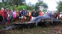 Goodbye, Lolong.. That amazing 6meter-long crocs..