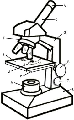 Parts of a microscope view free 5th grade science worksheet intro to parts of a microscope has great questions ccuart
