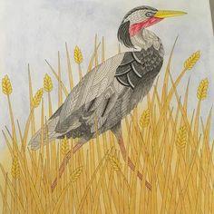 Millie Marotta's Wild Savannah - Heron