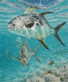 Remarkable Paintings of Marine-Fish Art by Don Ray | Sport Fishing