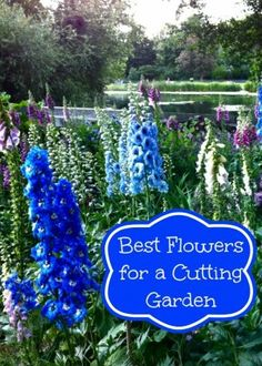 Grow Best Flowers for a Cutting Garden
