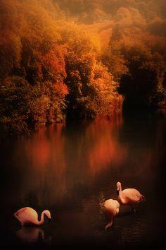 Flamingo Dreams by Jenny Woodward