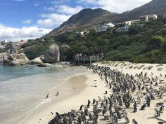 Boulders Beach Boulder Beach, Cape Town, Bouldering, South Africa, Water, Outdoor, Gripe Water, Outdoors, Outdoor Games