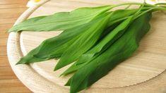 Kde roste a co s ním? Allium, Korn, Plant Leaves, Food And Drink, Cooking Recipes, Herbs, Vegetables, Drinks, Tableware