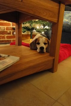 Bibi the Beagle, Christmas in Suffolk 2013
