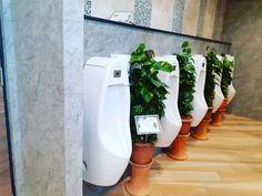 """ถูกใจ 2 คน, ความคิดเห็น 0 รายการ - Modern Garden Thailand (@moderngardenthailand) บน Instagram: """"งานตกแต่งปรับภูมิทัศน์พื้นที่ภายในOffice แบบสวนกระถาง #ต้นไม้ฟอกอากาศ 🌱 --------------------------…"""" Garden, Modern, Shop, Garten, Trendy Tree, Gardens, Tuin, Yard, Store"""