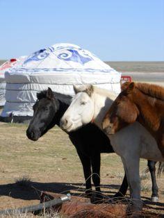 Diane & Daniel's Blog: Mongolian Grasslands
