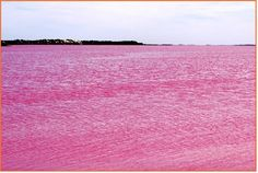 Pink Lake near Esperance on Western Australia's far southern coastline is a popular natural attraction.  Pink Lake is a salt plain which, in the right weather conditions, appears pink. The pink color of the lake is due to the high concentration of salt tolerant algae
