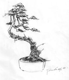 About The Art of Bonsai Project. An effort to explore the aesthetic and artistic elements of bonsai, including technical composition, presentation, display and other ways in which bonsai impacts the human eye and soul. Bonsai Tree Tattoos, Japanese Bonsai Tree, Tree Sketches, Tree Drawings, Bonsai Garden, Bonsai Forest, Bonsai Trees, Family Tree Poster, Oak Tree Tattoo