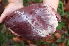 Deer hearts are one of the most underappreciated cuts of venison around. While many hunters Deer Recipes, Wild Game Recipes, Dog Food Recipes, Deer Heart Recipe, Deer Butchering, Deer Processing, Meat Love, Deer Fence, Deer Meat
