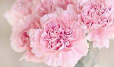 Cómo disminuir las ojeras con agua de rosas - Trucos de belleza caseros
