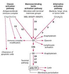 The Complement System Concept Map.9 Best Imunologija Images Medical Medicine Nursing Schools