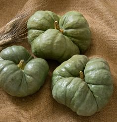 Triamble Pumpkin Seeds! Found one of these pumpkins at the store this past fall! He stayed on our table for months!