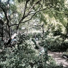 """From a hidden fairytale garden on lower east - welcoming sign outside """"Open to the public"""" small paths and wild growing greens  peaceful stop in the busy city"""