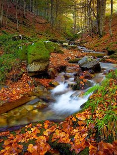SELVA DE IRATI  Navarra  Spain/ OTOÑO 2014 Beautiful Sites, Beautiful World, Beautiful Places, Landscape Photos, Landscape Photography, Nature Photography, Beautiful Waterfalls, Beautiful Landscapes, Paris Rouen
