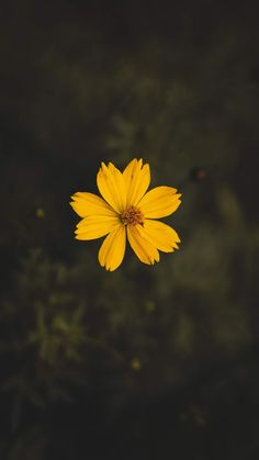 Yellow cosmos flower close-up photography · free stock photo Wallpaper Sky, Aesthetic Iphone Wallpaper, Aesthetic Wallpapers, Cute Home Screen Wallpaper, Yellow Flower Wallpaper, Sunshine Wallpaper, Happy Wallpaper, Wallpaper Maker, Beautiful Wallpaper