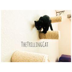 (paid link) Cat Shelf Floating Cat Shelves MEGA marketing cat cat ...