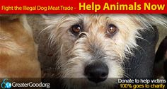 Fight the Illegal Dog Meat Trade: Help Animals Now