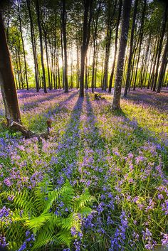 ferns in a sea of blue by Nigel Quest Photography via Flickr