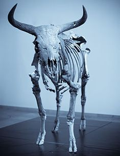 they survived in Europe until the last recorded aurochs, a female, died in the Jaktorów Forest, Poland in 1627