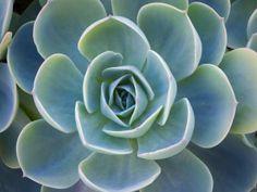 Succulents, Posters and Prints at Art.com
