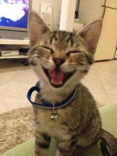 Jack, the happy kitty ✮✮ Looks just like Hercules. the kitten my cat stole & keep