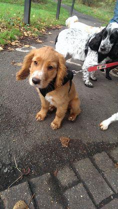 Woof. Hello Bear. Www.Harrison's-dogs.co.UK Dog walker #Clapham