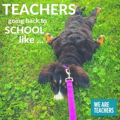 Things That Happen To Teachers When They Go Back To School - 16 grumpy puppies who perfectly understand how you feel about going back to work after summer break