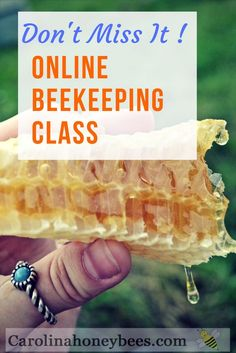 Learn how to be a beekeeper with this online beekeeping class by a Master Beekeeper. Becoming a beekeepers is an attainable goal and you can produce your own honey. Carolina Honeybees