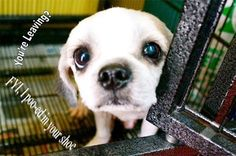 Cute Dogs  A Healthy Dog is a Happy Dog / www.PetWellbeing.org
