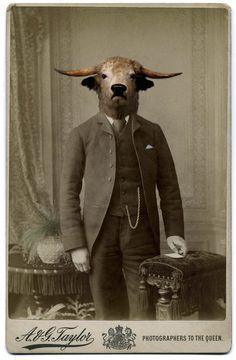 AstroSpirit / Taurus ♉ / Earth / proud bull by Charlotte Cory, anthropomorphic vintage photo