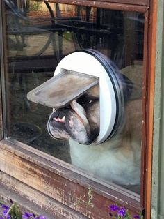 My uncle has an English Bulldog, and I can absolutely see her doing this.