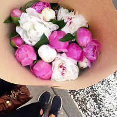 peonies + blooms