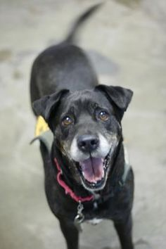 3 / 1   ***SENIOR***   Petango.com – Meet Myra, a 8 years 2 months Retriever, Labrador / Mix available for adoption in LIHUE, HI Contact Information Address  3-825 Kaumualii Highway, LIHUE, HI, 96766  Phone  (808) 632-0610  Website  http://www.kauaihumane.org  Email  Adoptions@kauaihumane.org