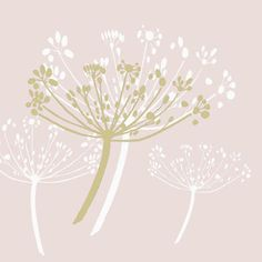 Cow Parsley Wallpaper - Bing Images