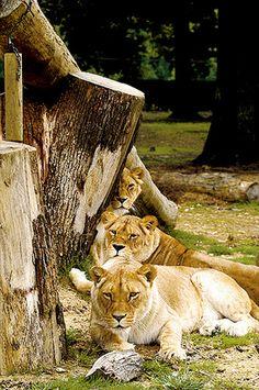 Ferme exotique de cadaujac d couvrez le plus grand for Zoo yvelines 78