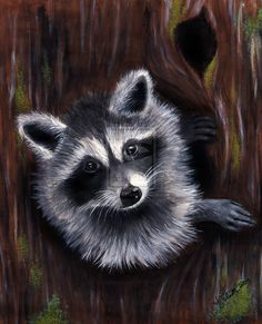 Baby Raccoon by geckoemmy on DeviantArt Raccoon Drawing, Raccoon Art, Baby Raccoon, Cute Raccoon, Racoon, Woodland Creatures, Woodland Animals, Canvas Painting Projects, Coastal Wall Art
