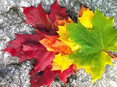 Bladeren in verschillende herfstkleuren.