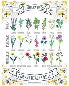 Bee-friendly herbs, perennials and annuals. SAVE THE BEES! No bees, no food. Stop using chemicals! Bee Friendly Plants, Bee Friendly Flowers, Save The Bees, Plantation, Bee Keeping, Geraniums, Dream Garden, Garden Plants, Flowering Plants