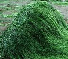Spirulina contains high amounts of protein, essential amino acids, essential fatty acids and vitamins and minerals. In short, the nutritional benefits of spirulina are pretty high. Vitamine B12, Spirulina Powder, Sea Vegetables, Green Algae, Protein Rich Foods, Healthy Foods, Healthy Life, Acide Aminé, Vitamins