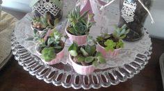 Cupcakes succulents