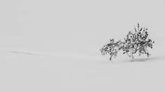 SELECTION OF THE DAY by #Expo #FineArt #Photography Silence Porretta Terme - 2015 Photo © Giovanni Modesti #Nature