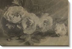 Birch Ply Prints of Peonies by Vintage Photography (900mm x 600mm) | Shop | Surface View
